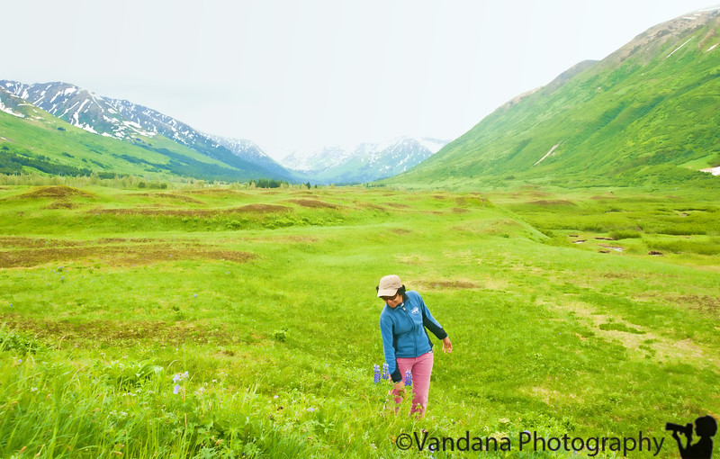 Alaska Travel Journal 2010