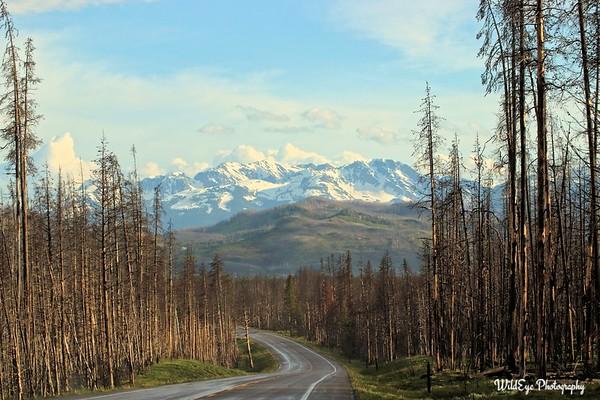 Grand Tetons & Yellowstone National Parks