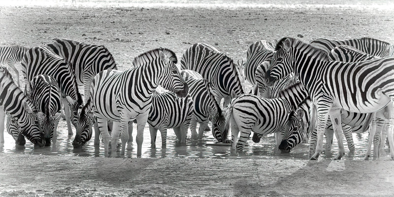 Namibia 69A8949.jpg