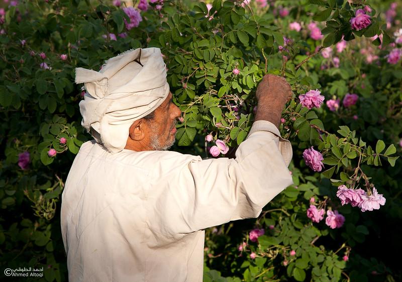 Roses Water (71)-Aljabal Alakhdhar-Oman.jpg