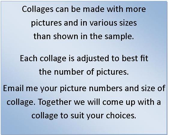 Collage information.jpg