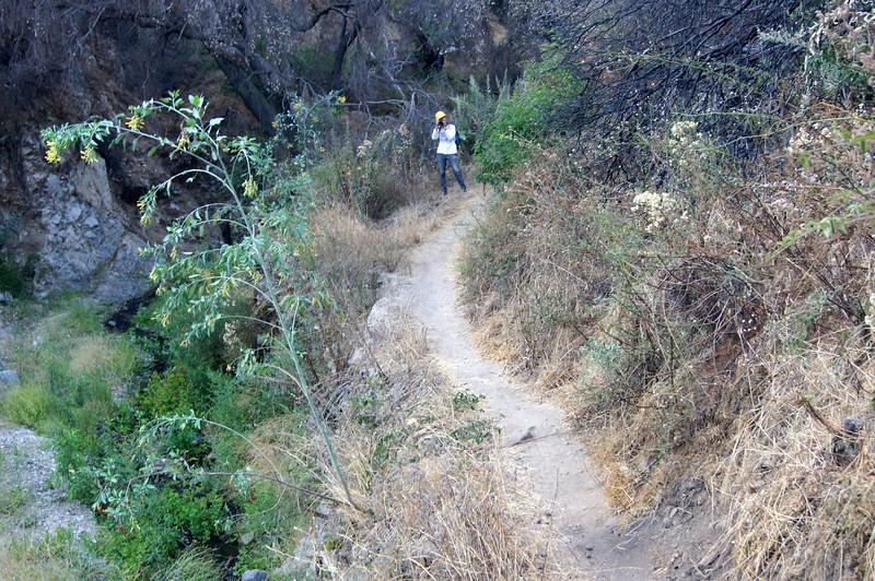 20110825020-El Prieto Trailwork Banner.JPG