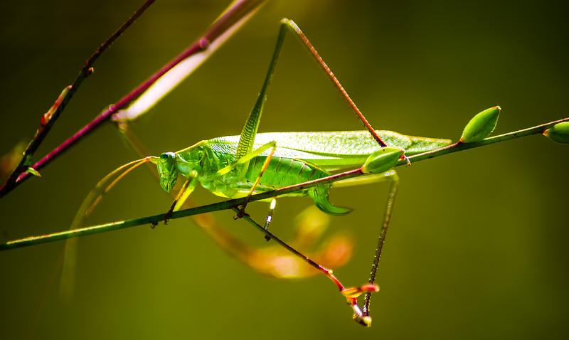 Bugs and Beetles - 129.jpg