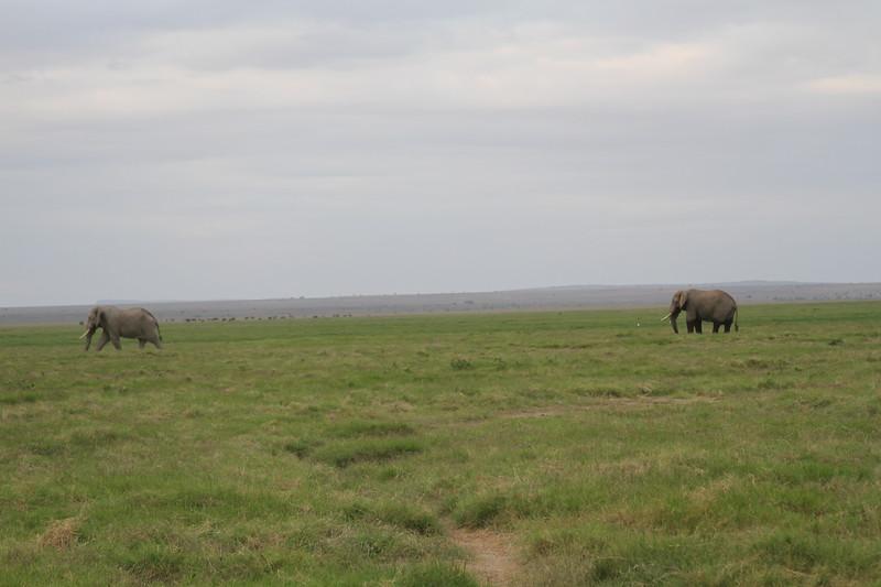 Kenya 2019 #2 1554.JPG