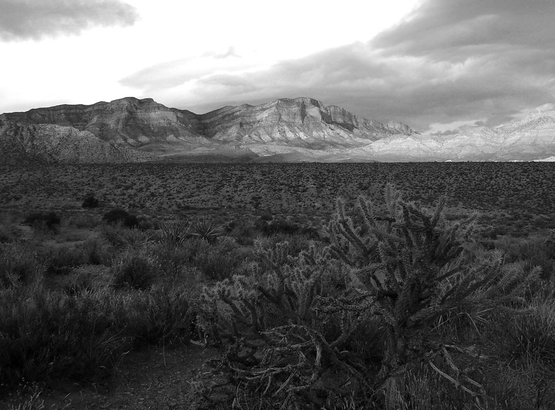 11- Red Rock Canyon, Bush and Mountains.JPG