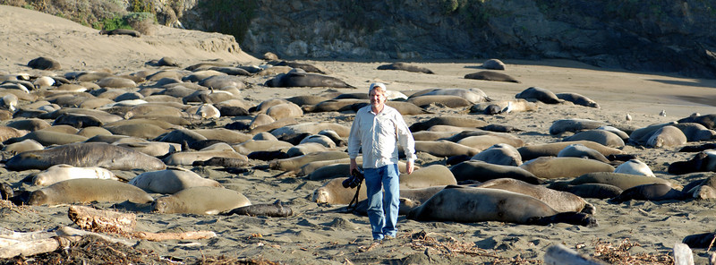 Seals, Whales and others