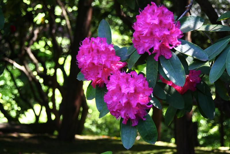 Portland Japanese Garden 6-3-11  1774.jpg