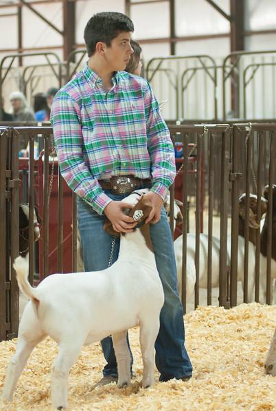kay_county_showdown_goats_20191207-73.jpg