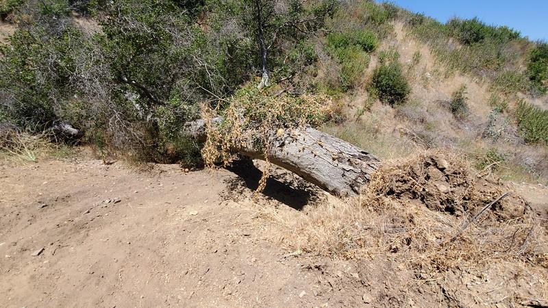 20190810068-Los Pinetos trailwork.jpg