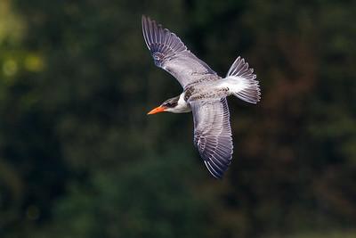 My Favourites - Bird in flight