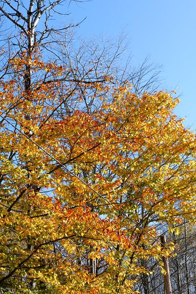 19 10 21 Fall Scenery in Bradford Co.
