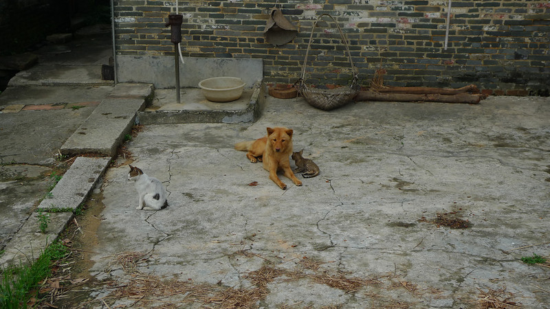 Who said dogs and cats cant coexist.  The dog was highly protective of the 2 cats there.