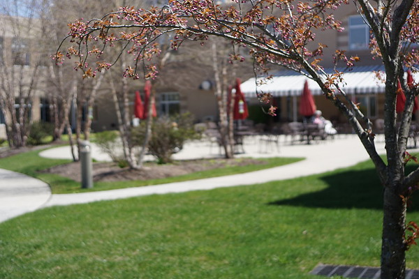 Springtime on JHR Campus 2018