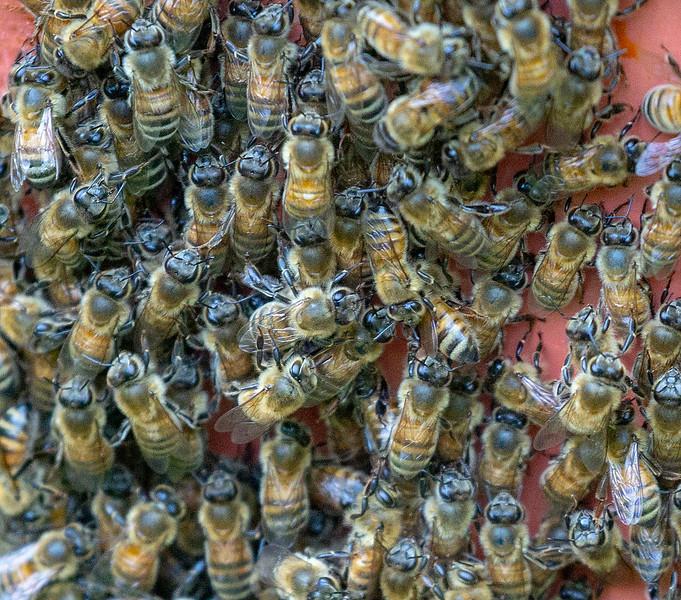 Bees huddled together