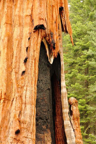 Yosemite 17.JPG