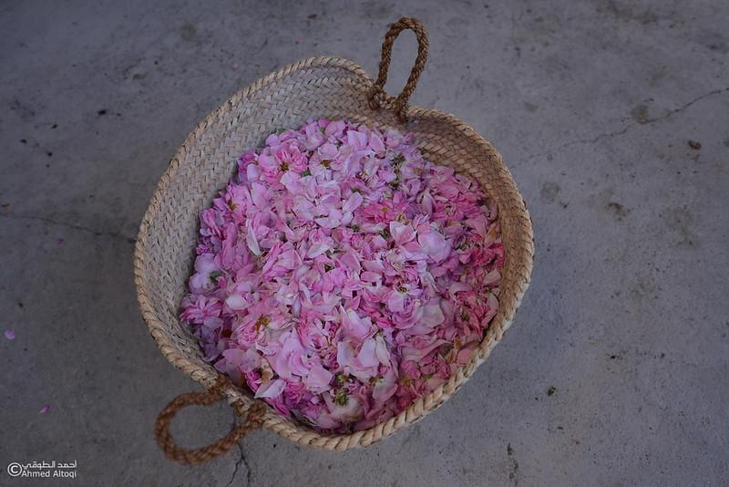 Roses Water (11)-Aljabal Alakhdhar-Oman.jpg