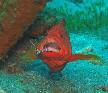 Dominica Underwater 2009