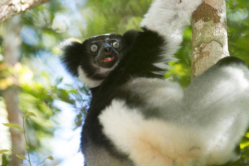 Madagascar_2013_FH0T9463.jpg