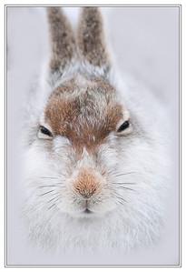 Scottish Wildlife ( mammals  etc. )