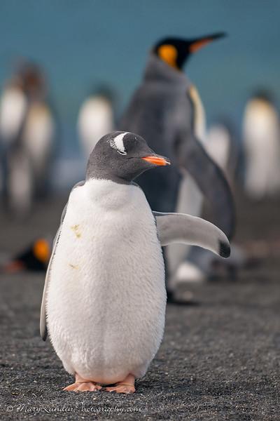 Antarctic-90