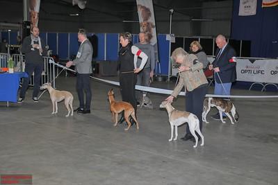 20190316 Internationale Hondenshow 2019