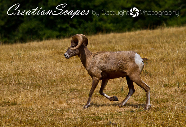Mammals in God's creation