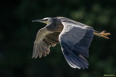 Heron's