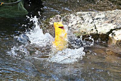 Gold Level Fishing Tournament 2018