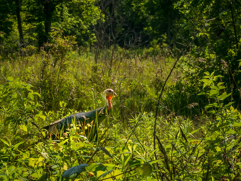 Point_Pelee_National_Park (1 of 8)