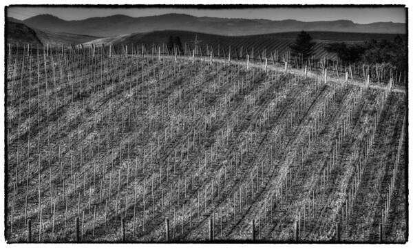 Napa Valley - Other Vineyards