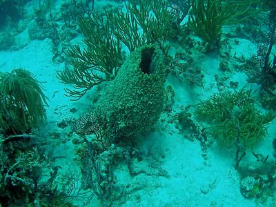 BVI Marina Cay Scuba Diamond Reef with JVD Scuba
