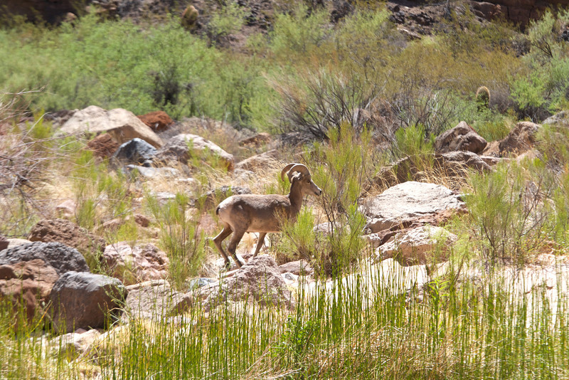 2014_Grand_Canyon_WHDW2_7D 59