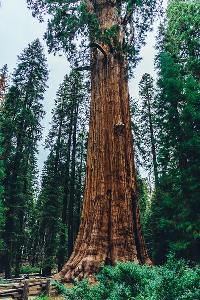Rui in Sequoia-07015.jpg