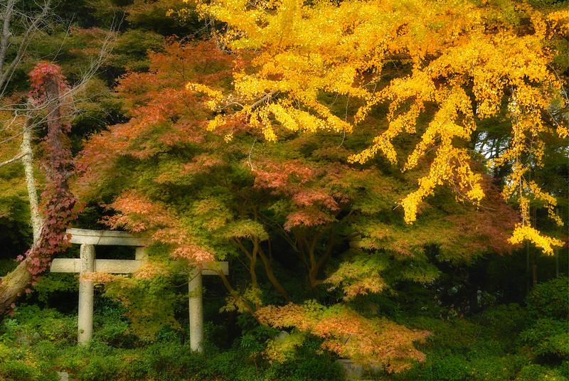 20081110_121_Glow_Upload.jpg
