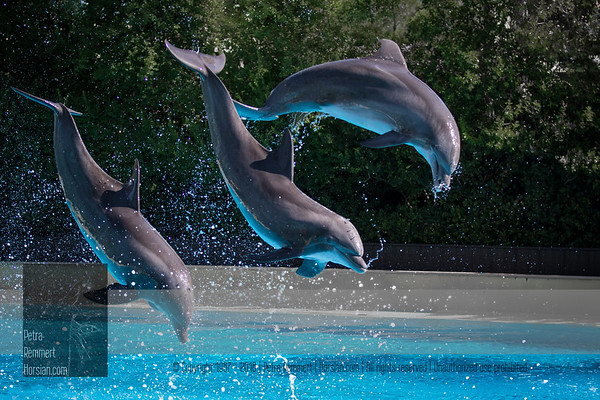 Dolphins, USA