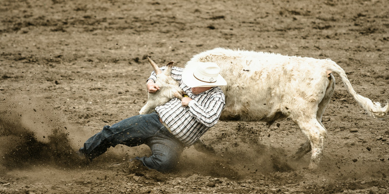 Steer wrestling at the Airdrie Rodeo. Airdrie, Alberta.