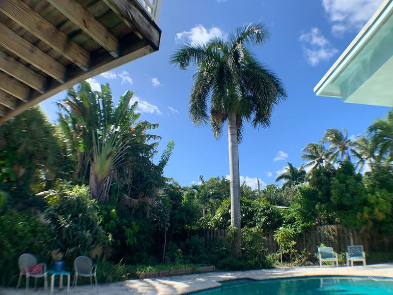 palm tree wide angle