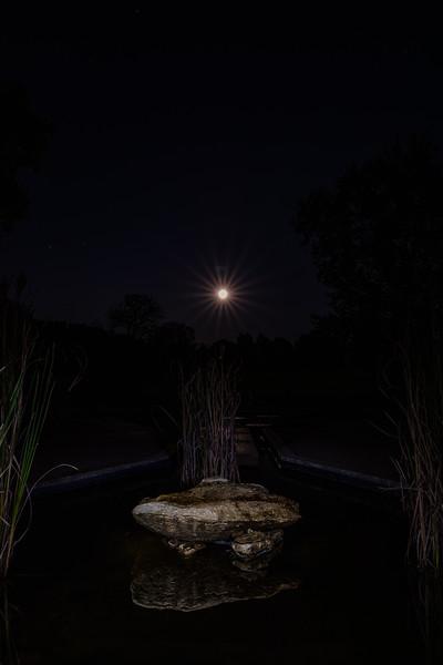 Falling Leaves Moon Rising