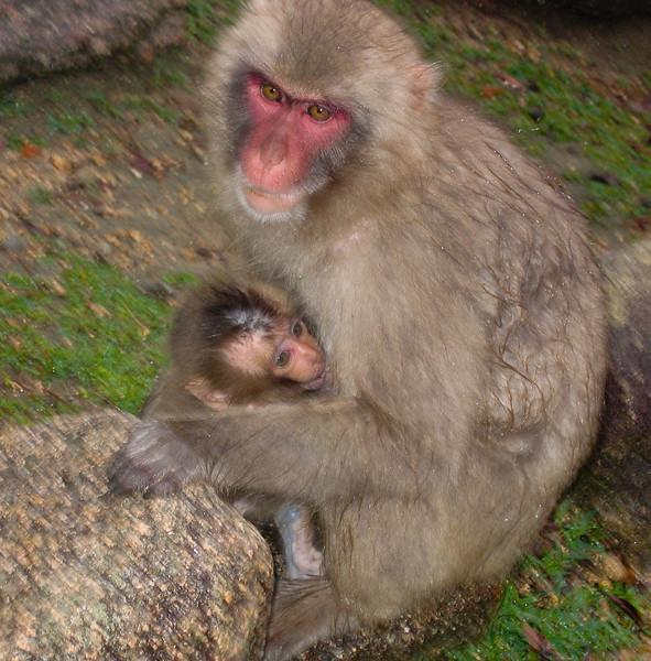 Monkey Family - digital photo (Canon S500) - Summer 2006