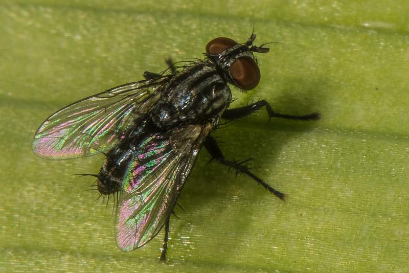 DSC_4471 Fly crpd NEF Striped +++++ PS- LL.jpg