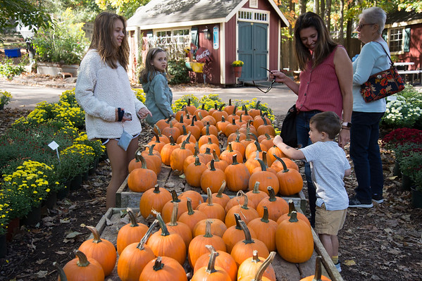 09/30/19 Wesley Bunnell | StaffrrMadelyn Rogers, age 11, Emily Rogers, age 8, and Hudson Rogers, age 3, pick out pumpkins during a family trip with their mother Kristen and grandmother Kathy Nodine at Karabin Farms in Southington on Monday afternoon.
