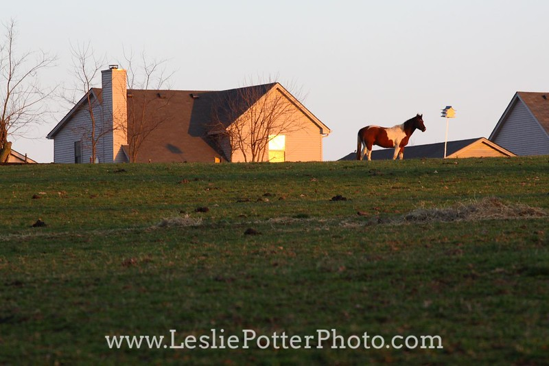 Suburban Development Encroaching on Horse Pasture