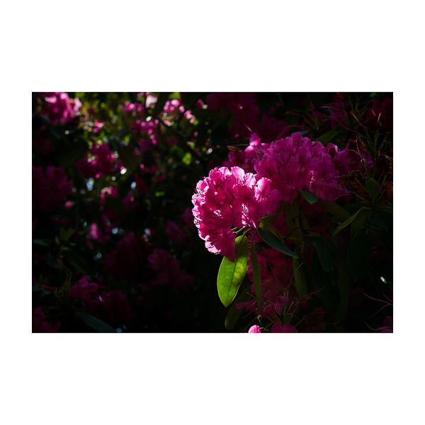 151_Flower_10x10.jpg