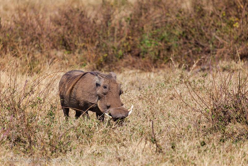 Ngorongoro-3.jpg
