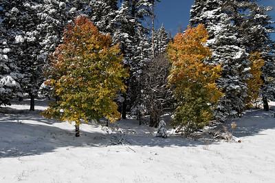 Sandia Fall Snow 10/8/2011