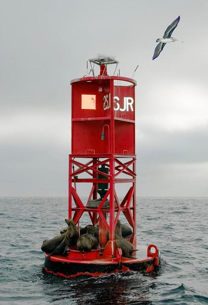 Newport Harbor_Sea Lions-3.jpg