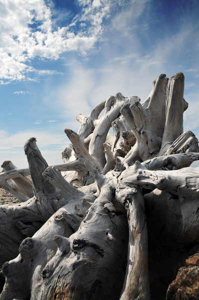 Weathered root structure.