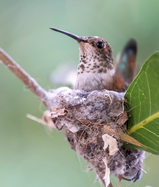 Hummingbirds-15.jpg