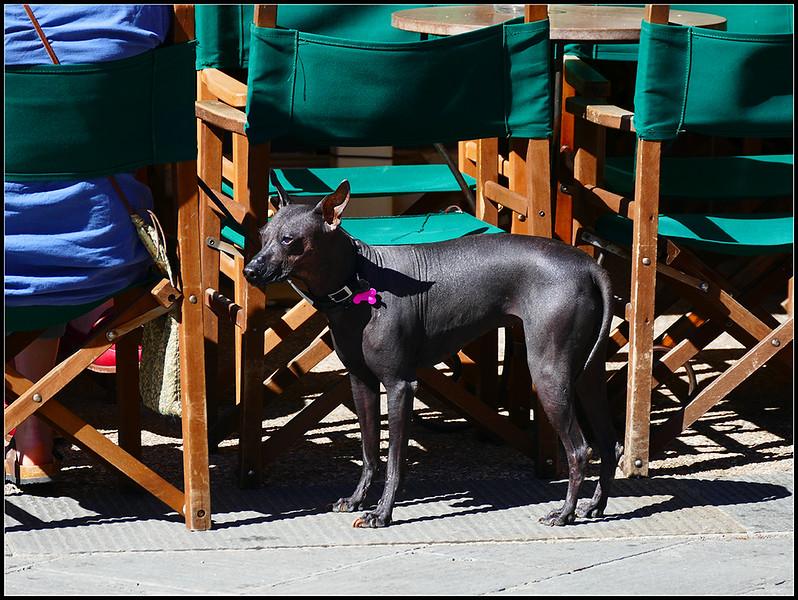 2016-05-Pietrasanta-240.jpg
