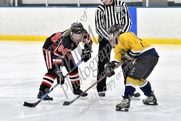 Predators vs Hawks Black